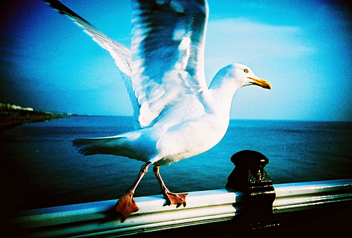 Outstanding Lomographic Images