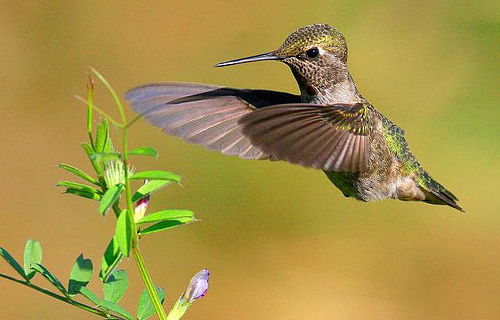 23 Outstanding Hummingbird photos
