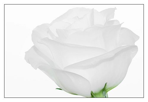 Outstanding White on White Images