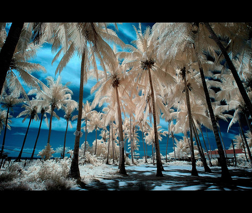 Twenty Outstanding Infrared Photographs