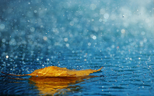 Outstanding Photos of Rain