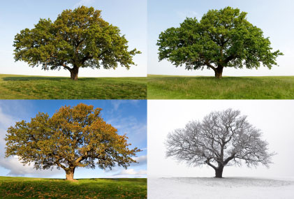 Different Seasons Have A Huge Effect On An Image