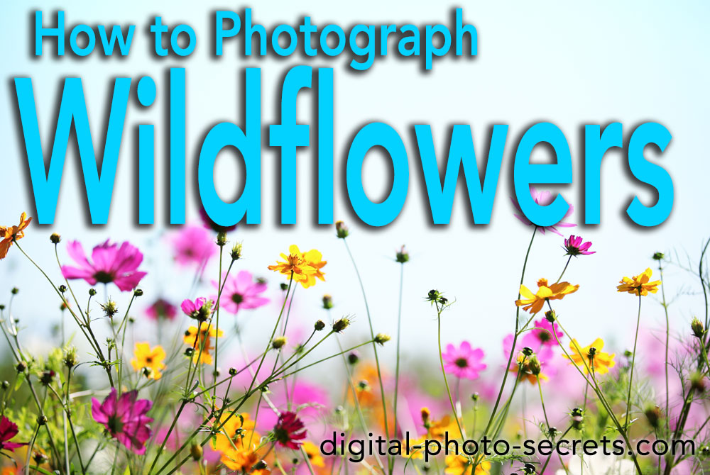 How to Photograph Wildflowers