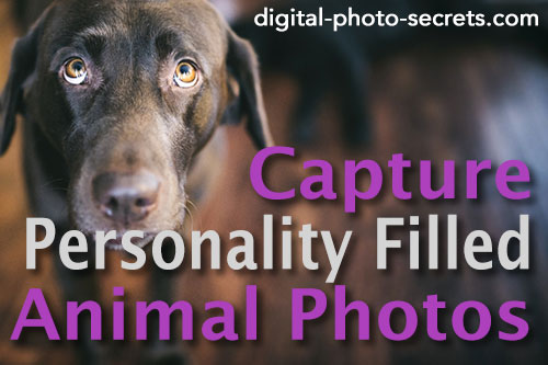 How to capture personality-filled animal photos