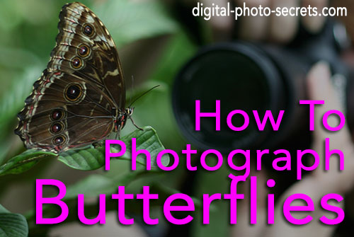 How to Photograph Butterflies