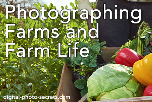 How to Photograph Farms and Farm Life