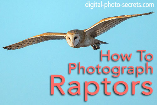 How to Photograph Raptors