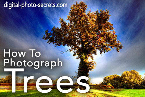 How to Photograph Trees
