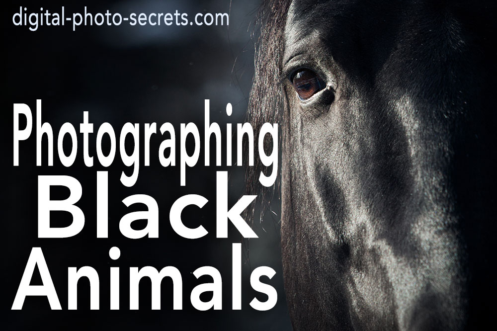 How to Photograph Black Animals