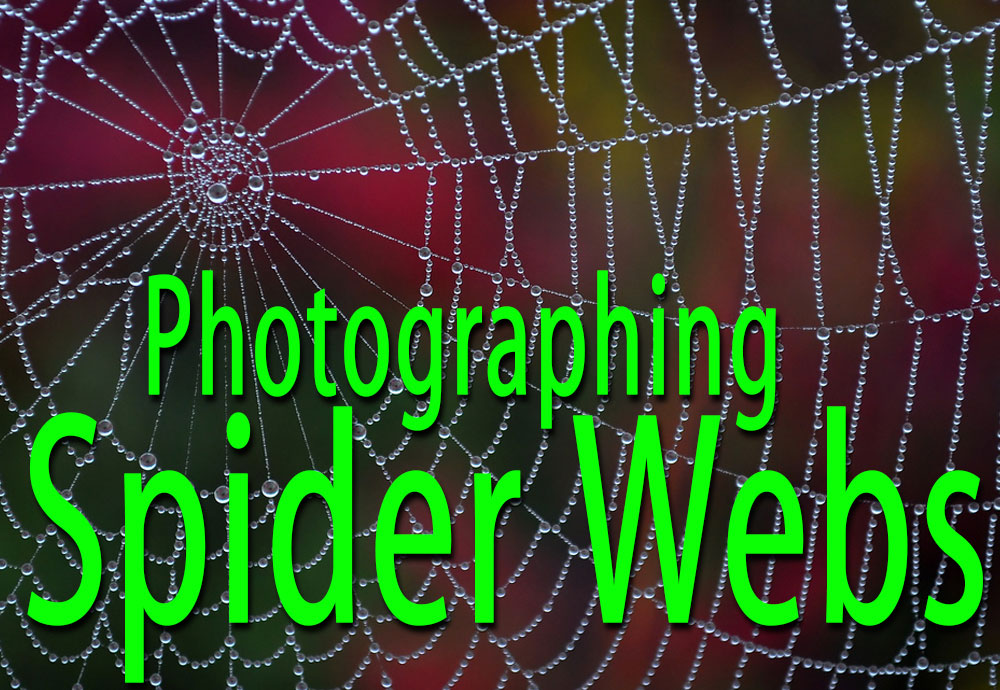 Photographing Spiders Webs
