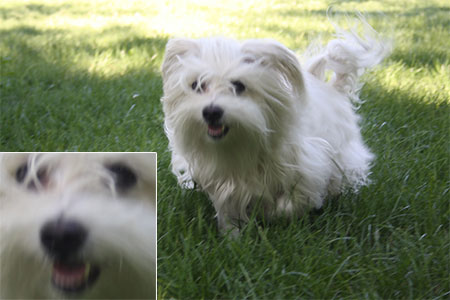 Ask David: Reducing Blur In Pet Photos